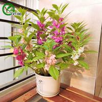 impatiens çiçek toptan satış-MIX Impatiens Tohumları Saksı Yetiştiricilerinin Bahçe Bonsai Çiçek Tohumu 50 Parçacıklar / lot P015