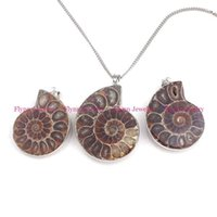 colgante fósil de amonita natural al por mayor-La mitad de la Ammonite Natural Conch Fossil Necklace Colgantes Joyería de Piedra Natural Plateado Bordure Diferente Amuleto Joyería Retro Europea
