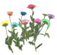 bracelet de fleurs séchées achat en gros de-100pcs pressé séché marguerite fleur plantes Herbarium Times gemmes bijoux pendentif Bracelet anneaux boucles d'oreilles fabrication de fleurs accessoires