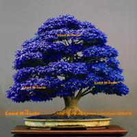 ingrosso semi di albero di bonsai giapponesi-10 semi / pack, semi di acero bonsai blu semi di albero bonsai. seme di acero giapponese blu cielo raro. Piante da balcone per giardino domestico