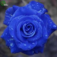 bonsai tohumları mavisi toptan satış-Mavi Gül Tohumu Bonsai Çiçek Bitki Tohumları Çok Kokulu 20 Parçacıklar / lot
