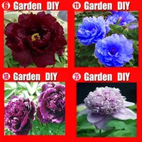 paeonia flower - China s Peony Seeds Paeonia suffruticosa Tree colors RED flower etc seeds Separate you will get bags