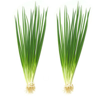 Wholesale Chinese Onions - Spring Chinese Onion Vegetable 500 Seeds   Bag Popular Cooking Onions Variety Easy to Grow from Seeds Heirloom Vegetable Seed