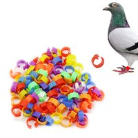 Wholesale New Arrival Plastic X Chicken Hen Pigeon Leg Poultry Bird Chicks Duck Parrot Clip Rings Band