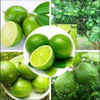 Wholesale Citrus Seeds - 500 pieces lot Thai Organic green Key Lime Seeds Citrus Aurantifolia Lemon Tree Seeds bonsai Fruit Seed For Home Garden Bonsai Flower Seed