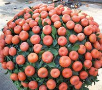 Wholesale china climb - Promotion Potted Edible Fruit Seeds mini Bonsai Orange Seeds China Climbing Orange Tree Seeds 100% fresh 20 PCS   bag Novel Seed