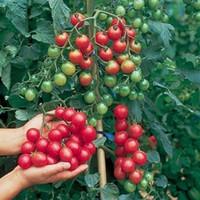 ingrosso bonsai pomodoro-Bonsai di verdure POMODORO CILIEGIA DOLCE MILLION giardino decorazione vegetale 20pcs A76
