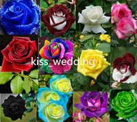 ingrosso piantare giardino di casa-Nuove varietà 10 colori Rose Flower Seeds 100 semi per confezione Semi di fiori per piante da giardino di casa