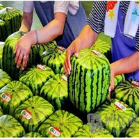 organic herbs - Garden Plants Square Watermelon Seeds Very Sweet Fruit Seeds With Plant Instructions