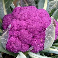 Wholesale Growing Garden Vegetables - 20 Purple Cauliflower Seeds easy to grow and GMO Free Garden Vegetable C065