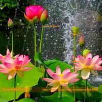 ingrosso fiori d'acqua cinese-Semi di loto sul laghetto da giardino, 1 seme / pacchetto, laghetto acquatico in stile cinese, semi di fiori di loto