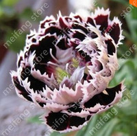 Wholesale Garden Dragons - 100pic chinese Dragon Rose Flower Seeds Exotic flower garden decoration