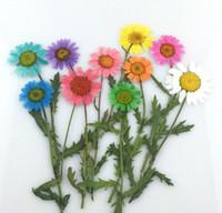 getrocknete blumen armband großhandel-100 stücke Gedrückt Getrocknete Sonnenblumen Blumen Pflanzen Herbarium DIY Material Schmuck Anhänger Armband Ringe Ohrringe Zubehör Machen