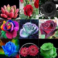 Wholesale Single Rose Decoration - New Varieties 10 Kinds Rose Plants Flower Seeds 100 Seeds Per Package Wedding Flower Seeds Home Garden Office Decoration