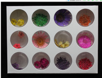 Wholesale Dry Flower For Nail Decoration - 12 Styles Real Flower Dried Flower Natural Dry Flower for Nail Art Decoration