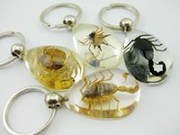 Wholesale Cool Spider - FREE SHIPPING 8 Pcs Yqtdmy Fashion Jewelry Real Scorpion Spider Crab Newest Drop Design Cool Keychain