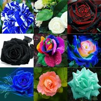 Wholesale Half Chinese - Wholesale New Varieties Colors Rose Red White Half Rose Seed 10 color 100 seeds per package flower seeds home