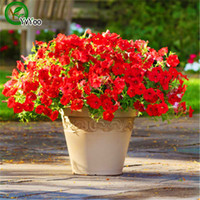 Wholesale Annual Plants - 200PCS Hanging Petunia Mixed Seeds Petunia Annual Flower Seeds Home Garden plant L056