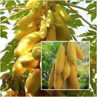 Wholesale unique fruit - Bonsai plant Yellow Gold Papaya seeds Delicious Fruit, Seeds Unique Very RARE garden decoration plant 50pcs A012