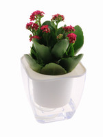 Wholesale Office Desk Styles - 2017 New Style Tansparent Self watering Plastic Planting Pots Lazy Pots or automatically water planters for home office Desk Planting Lover