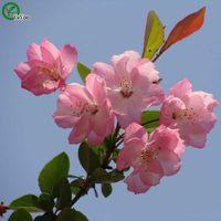 ingrosso semi di begonia-Semi di begonia Più colore Charming Chinese Flower Seeds Piante bonsai per giardino 50 particelle / lotto y021