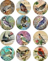 Wholesale Birds Foods - Free shipping bird glass Snap button Jewelry Charm Popper for Snap Jewelry good quality 12pcs   lot Gl332 Jewelry making DIY