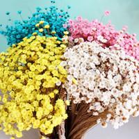 ingrosso piccoli fiori secchi-200pcs / lot fiori secchi naturali Mini Margherita piccola stella fiore decorazione della casa Fiori SPEDIZIONE GRATUITA