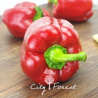 Wholesale Bell Peppers Seeds - Red Bell Pepper Vegetable Seeds 20 Pcs   Bag Sweet Pepper Seeds Easy to Grow 100% Real
