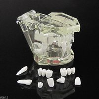 Wholesale DC15 crystal teeth Comprehensive Pathology and implant Plastic model dental teeth model Some tooth removeable with implant