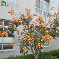 semillas de hortalizas gmo al por mayor-Semillas de caqui Bonsai planta de jardín vegetal no orgánico GMO semillas 30 unids C014