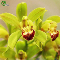 Wholesale Annual Plants - Chinese Boat orchids seeds Bonsai Seeds Garden Plants Flower Seeds Annual Herb 20 Particles   lot u020