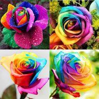 çok yıllık çiçekler için tohumlar toptan satış-Yıllıklar Güzel Çiçekli Güller Tohumları Gökkuşağı Renkler Gül Tohumları 100 Paket Çiçek Tohumları Saksı Succulents Soğuk HY1175