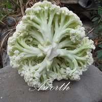 Wholesale cauliflower seeds resale online - Cauliflower Vegetable Chinese Special Variety Seeds Easy to Grow from Seeds Heirloom Vegetable Seed Very Tasty and Crispy