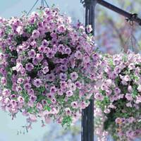 ingrosso semi di gloria-(300 pezzi / lotto) Semi di petunia Viola Petunia Hybrida Giardino Casa Bonsai Balcone Fiore Morning Glory semi
