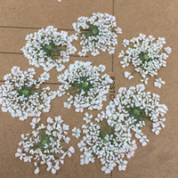 Wholesale Display 14 - 168 Pcs Minoan Lace Real Pressed Flowers DIY handmade material Specimens For Pendant 1 lot 14 Bags Free shipment