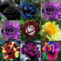 Wholesale New Beautiful Flowers - Beautiful New Varieties 10 Colors Rose Flower Seeds 100 Seeds Per Package Free Shipping Home Garden