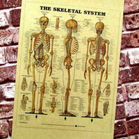 """Wholesale A2 Paper - Multi-style Vintage """" Human bones and organs diagram """" Poster Home Decoration Detailed Antique Poster Wall Chart Retro Matte Kraft Paper A2"""