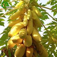 semillas muy raras al por mayor-Bonsai planta de semillas de papaya de oro amarillo fruta deliciosa, semillas planta de decoración de jardín muy rara 50pcs A012