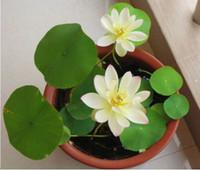 ingrosso aquatic plant-Semi di loto multicolore piante idroponiche fiori acquatici mini ninfea 10pcs giardino decorazione vegetale 10pcs F127