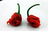 Wholesale Decoration Vegetable - Bonsai vegetable Organic Carolina Reaper Chilli Pepper Seeds Hot Seeds garden decoration plant 100pcs A71