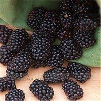 böğürtlen meyveleri toptan satış-100 besleyici Ön-Tabakalı Jumbo Thornless Blackberry Tohumları sulu tatlı sağlıklı meyve DIY Ev Bahçe Meyve Tohumları