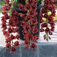 ingrosso fiori di orchidea bonsai-Orchidee da barca Semi Bonsai Semi di fiori Piante in vaso Fiori 20 Particelle / Sacchetto R016