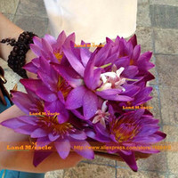 семена лотоса лилии оптовых-Семена цветов, темно-фиолетовый воды семена Лилии, 1 Семена / упак., мини маленький Лотос бонсай воды Нимфа