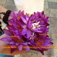 lotus bonsai toptan satış-Çiçek Tohumları, Koyu Mor Su Zambak Tohumları, 1 Tohumlar / paketi, Mini Küçük Lotus Bonsai Su Perisi