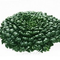 Wholesale Winter Seeds - Black Dwarf Chinese Cabbage Vegetable Asian Greens Tatsoi 500 Seeds Hardy Winter Garden Vegetable