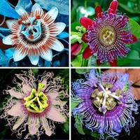 plantes vivantes du jardin achat en gros de-Fleur de la passion (Passiflora incarnata), 200pcs / sac certifiée, semences vivantes pures, véritable plante indigène pour jardin potager