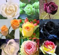semillas muy raras al por mayor-Envío gratis semillas de flores de rosa multicolor * 100 semillas por paquete * Barato balcón en maceta varias flores semillas de plantas de jardín