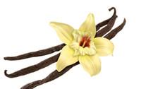 Wholesale Vanilla Bags - 100seeds bag Vanilla seeds pyrethrum vanilla flower seeds Annual flower pots planters