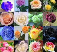 sementes de flores planta de rosas venda por atacado-Frete Grátis Multicolor Rose Flor Sementes * 100 Sementes Por Pacote * Varanda Barato Vária Várias Flores Plantas De Jardim
