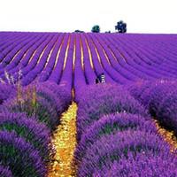 ingrosso semi di lavanda-Semi di lavanda viola Semi di fiori Pianta di bonsai da interno 50 particelle / lotto T010